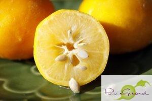 citroenzaden