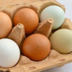 eieren-in-schaal