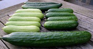 komkommers_breed