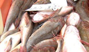 visserij_vis